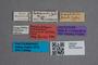 2819591 Niphetodes leonhardi LT labels IN