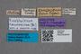 2819607 Anthobium caucasicum HT labels IN