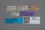 2819608 Anthobium celsum ST labels IN
