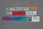 2819610 Anthobium chinense LT labels IN