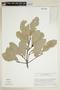 Elaeodendron xylocarpum (Vent.) DC., J. A. Steyermark 88671, F