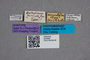 2819596 Anthobium miricolle ST labels IN