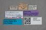 2819619 Anthobium transcaucasicum ST labels IN