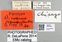 2840738 Dicrania fraudulenta PT IN labels