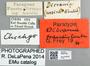 2840739 Dicrania fraudulenta PT IN labels