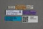 2819625 Phyllodrepa graeca HT labels IN