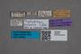 2819627 Phyllodrepa luigionii HT labels IN