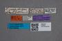 2819628 Phyllodrepa propinqua HT labels IN