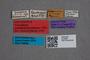 2819630 Phyllodrepa schatzmayri LT labels IN