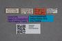 2819632 Anthobium luigionii ST labels IN