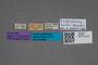 2819634 Anthobium korbi ST labels IN