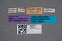 2819642 Omalium deubeli ST labels IN