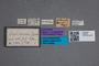2819644 Omalium italicum ST labels IN