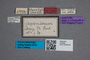 2819645 Omalium japonicum ST labels IN