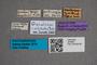 2819647 Omalium mesopotamicum HT labels IN