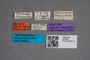 2819651 Phloeonomus sonani ST labels IN