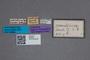 2819654 Phloeonomus sumatrensis ST labels IN
