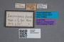 2819660 Phloeonomus monilicornis bosnicus ST labels IN