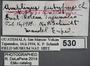 530 Amplinus eutypus HT IN labels