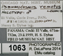 1063 Psammodesmus remotus HT IN labels