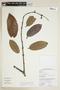 Salacia impressifolia image