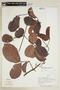 Salacia multiflora image