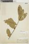 Tontelea micrantha (Mart. ex Schult.) A. C. Sm., BRAZIL, F