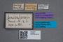 2819663 Phloeonomus baicalensis HT labels IN