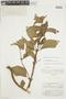 Sinningia schomburgkiana (Kunth & Bouché) Chautems, BRITISH GUIANA [Guyana], F