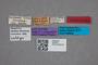 2819672 Megarthrus dentipes LT labels IN