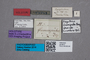 2819673 Megarthrus flavosignatus HT labels IN