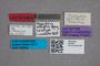 2819677 Megarthrus solitarius adelphus LT labels IN