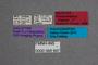 68997 Protopselaphus frogneri HT labels IN