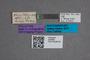2819680 Proteinus flavocaudatus HT labels IN