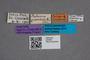 2819681 Proteinus fuscotestaceus ST labels IN