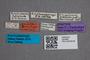 2819683 Nesoneus acuticeps ST labels IN