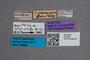 2819684 Phloeonomus toxopeanus ST labels IN