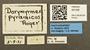 45109 Dorymyrmex pyramicus L IN