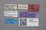 2819241 Stenus hilfi ST labels IN