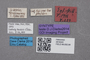 2819243 Stenus helleri ST labels2 IN