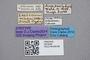 2819246 Leptacinus magniceps ST labels IN