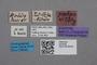 2819248 Stenus grandipennis ST labels IN