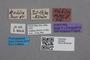 2819248 Stenus grandipennis ST labels2 IN