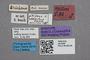 2819260 Stenus hackeri ST labels IN