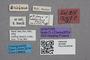2819260 Stenus hackeri ST labels2 IN