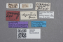 2819261 Stenus gramineus ST labels IN
