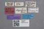 2819261 Stenus gramineus ST labels2 IN