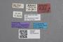 2819262 Stenus hessei ST labels IN