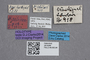 2819269 Stenus pilifrons HT labels IN