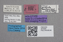2819264 Stenus guttula mallorcinus HT labels IN